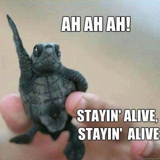 Alive Pic.jpg